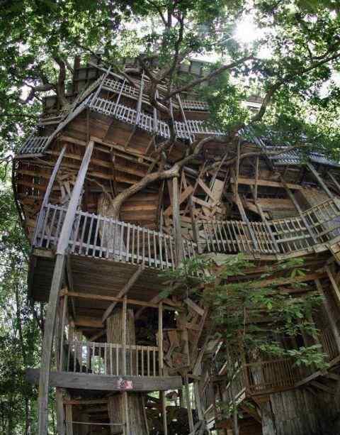 世界最大树屋被烧 世界最大树屋被烧 世界最大树屋在哪被谁烧毁了
